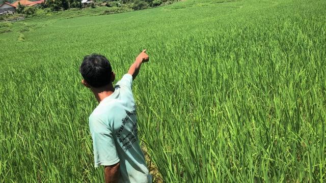 Reisbauer Tui auf seinem Feld in Laos.