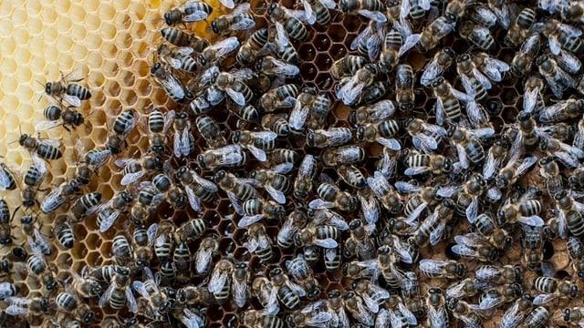 Bienen in einem Stock