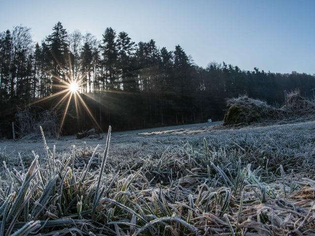 Nach der kalten Nacht leuchten die ersten wärmenden Sonnenstrahlen durch den Wald