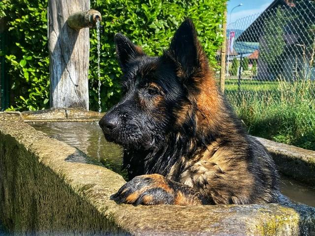 Ein Hund erfrischt sich in einem Brunnen.