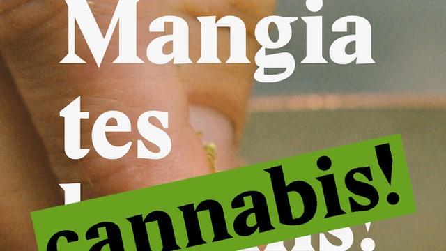Laschar ir video «Mangia tes cannabis!»