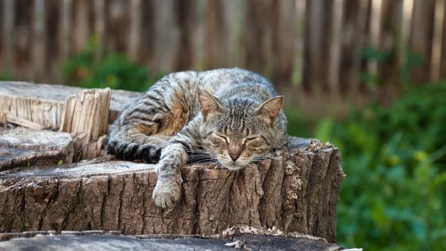Eine Katze liegt auf einem Baumstamm