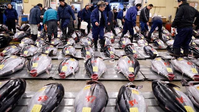 Thunfische ausgestellt auf einem Fischmarkt