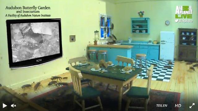 Kakerlaken im Puppen-Wohnzimmer.