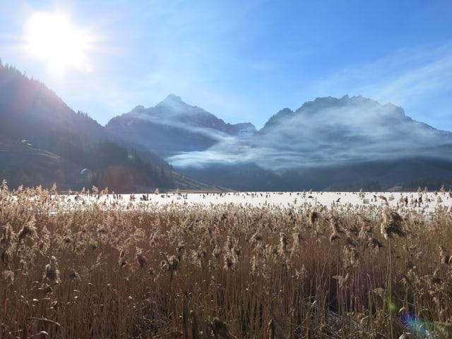 Schilf mit gefrorenem See im Hintergrund.