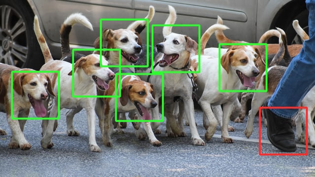 Ein Rudel Hunde, um deren Gesichter ein grünes Viereck gezeichnet ist, mit dem das maschinelle Lernen des Computers gezeigt werden soll.