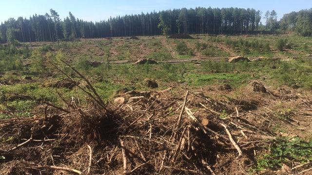 Dürrer Boden und Äste im Wald von Kestenholz