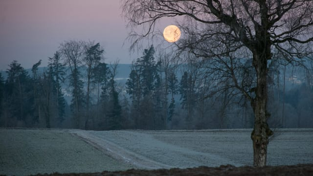 Eine kalte Winternacht im Januar am Horizont der Vollmond
