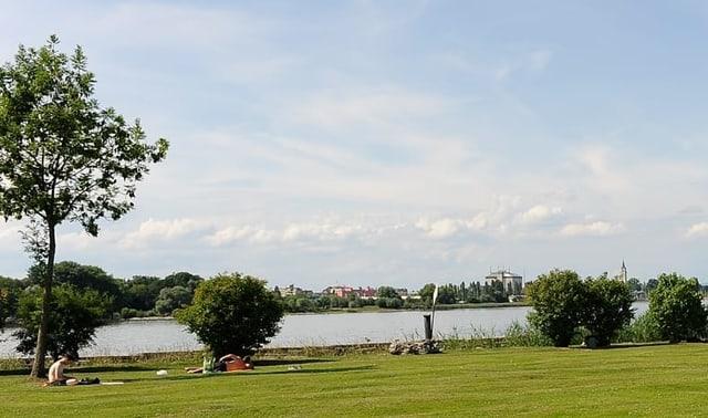 Grasfläche am Seeufer des Bodensees.