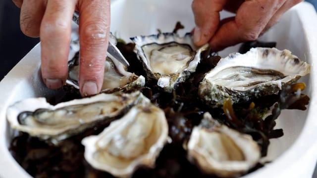 Ein Mann nimmt Austern vom Teller