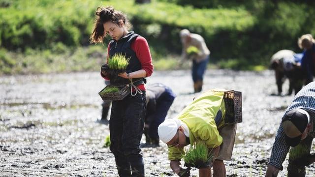 Mehrere Menschen arbeiten gebückt auf einem Feld, eine Frau steht.
