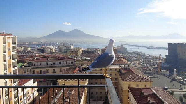 Blick auf eine Möwe, die auf dem Gelände eines Balkons sitzt und über eine Stad schaut.