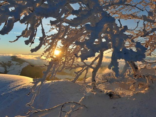 Sonnenaufgang im Tiefschnee.