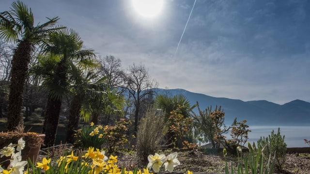 Viel blauer Himmel und spriessende Blumen in Ascona.