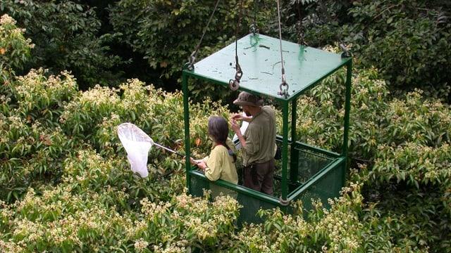 Ein 50 Meter hoher Kran mit einer offenen Gondel lässt die Forscher über die Wipfel des Regenwalds gleiten.