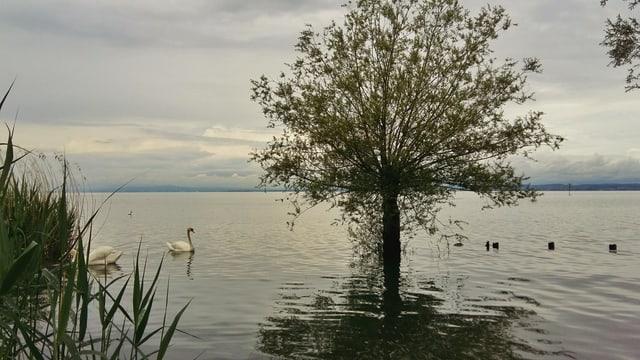 Schon am 8. Juni hatte der Bodensee Hochwasser. Am Wochenende könnte es Warnstufe 4 geben.