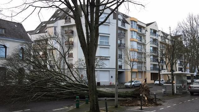 Umgefallener Baum in Brest.
