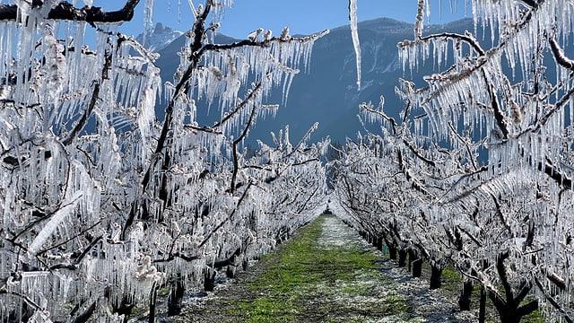 Frostschutz bei Martigny.