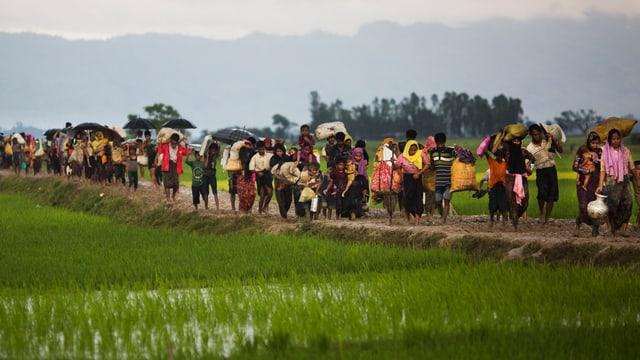 Rohingya auf der Flucht durch Reisfelder an der burmeischen-bangladeschischen Grenzen.