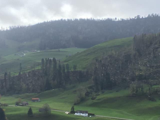 Bäume auf einem Hang wurden vom Sturm entwurzelt.