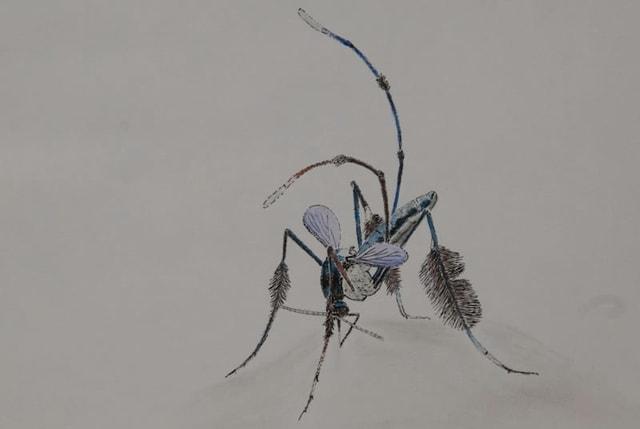 Stechmücke gezeichnet