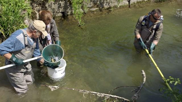 Video «Fische: Im Kampf gegen das Aussterben» abspielen