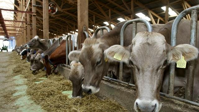 Tiere in einem grossen Stall