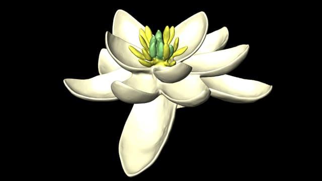 Illustration der Ur-Blüte