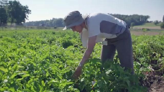 Frau arbeitet im Feld
