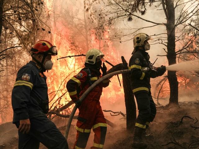 Zwei griechische Feurwehrmänner und ein slowakischer Feuerwehrmann löschen ein Feuer beim Dorf  Avgaria auf Euböa.