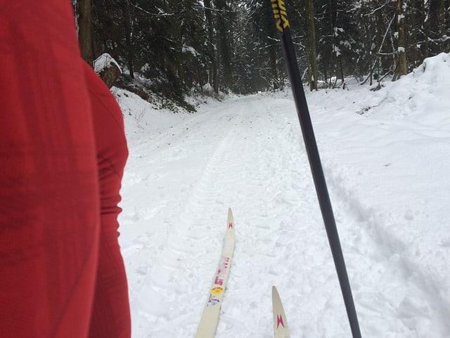Ein Waldweg und ein Langläufer.