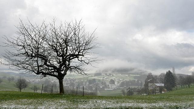 Blick an Baum ohne Blätter auf einer Wiese. Auf der Wiese wenig Schnee.
