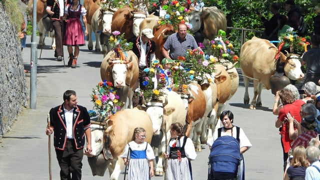 Menschen in Trachten und geschmückte Kühe.