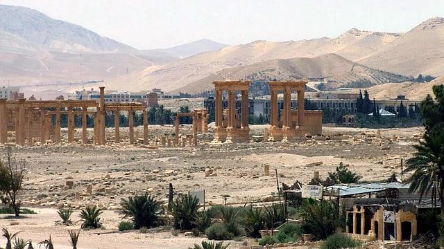 Palmyra aus Distanz.