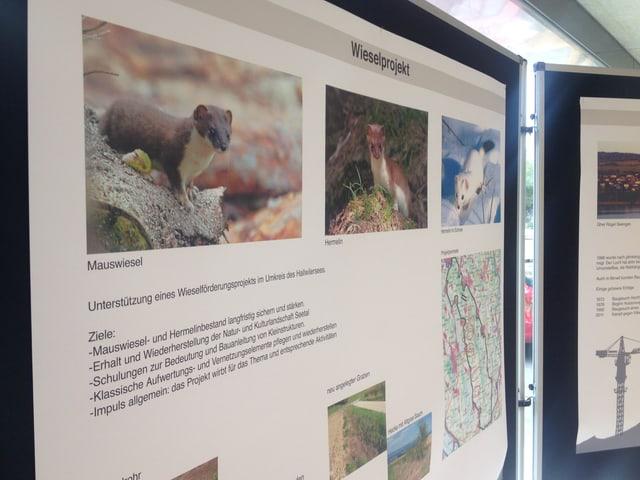 Schautafel mit Informationen zum Wiesel-Projekt