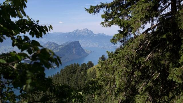 Blick aus einem Wald an der Rigi-Flanke Richtung Bürgenstock und Pilatus.