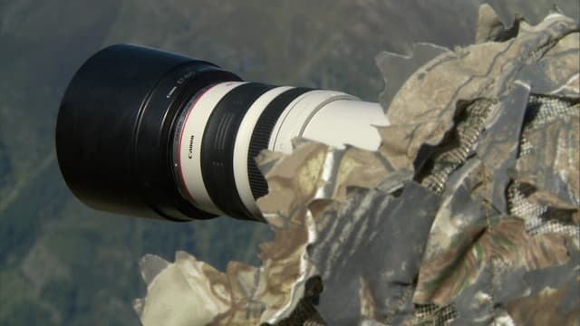 Video «Neue Bilder wilder Tiere: Mit der Kamera zum Tier (3/3)» abspielen