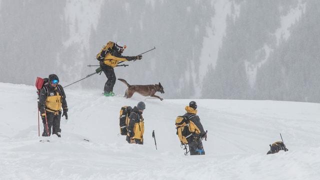 Mehrer Retter und Lawinenhund bei der Suche
