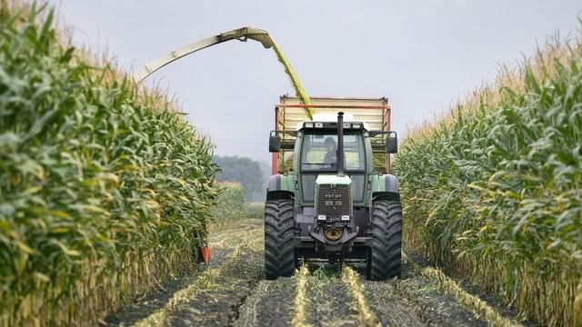 Traktor bei der Maisernte.