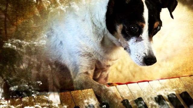 Laurie Andersons Hund Lolabelle spielt Klavier
