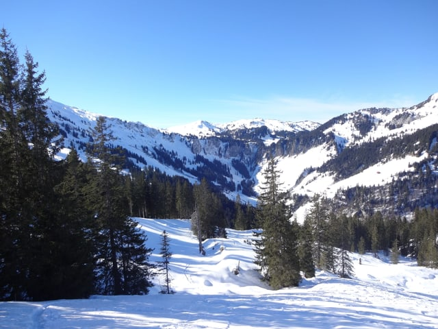 Winterlandschaft mit Schnee und Tannenbäumen