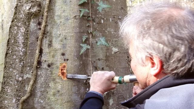 Ein Mann ritzt mit einem Spachtel an einem Baum.