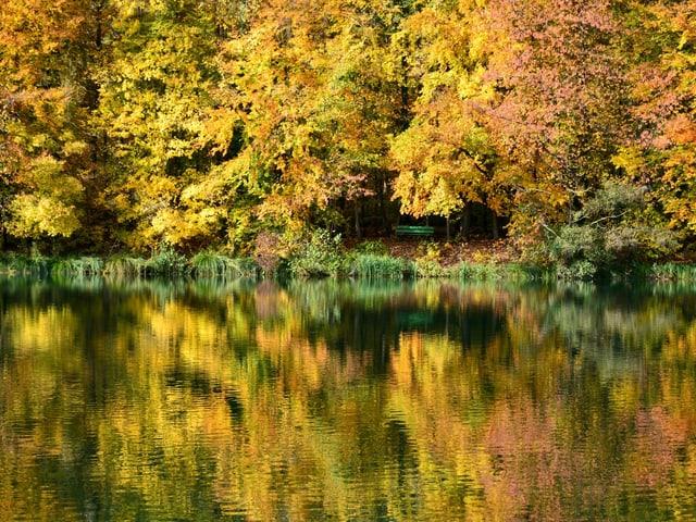 Gelbe Blätter, Spiegelung im See.