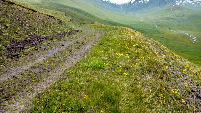Ein Weg über einen Hügel.