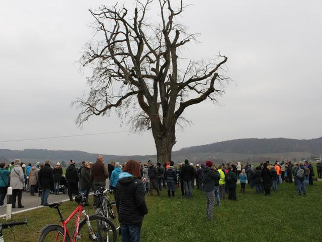 Viele Leute auf Feld vor Baum