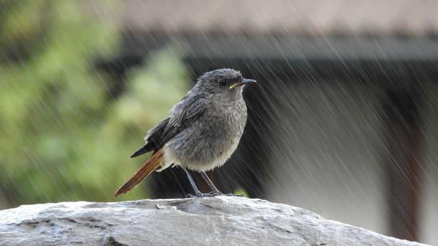 Ein Vogel im Regen