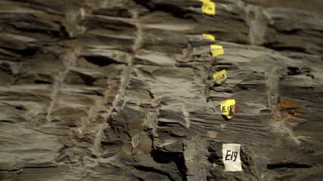 Auf der ganzen Fläche sieht man das Gestein des Opalinuston. Auf der rechten Seite hat es Markierungen im Fels mit Zahlen drauf.