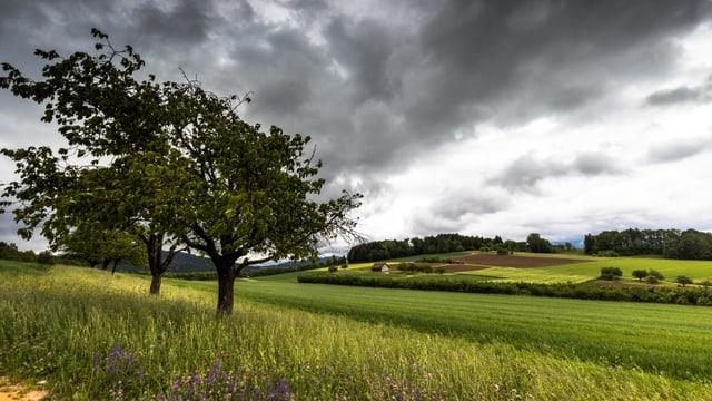 Regenwolken in der vergangenen Woche bei Auenstein.