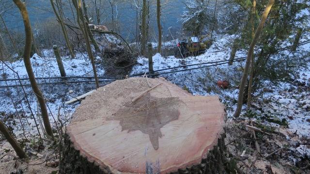 Baumstrunk auf einem Hügel, darunter Fluss.