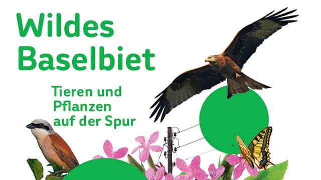 Ein Ausschnitt der neuen Ausstellung mit verschiedenen Vögeln.